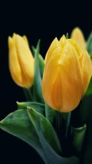 Verticale selectieve opname van tulpen mooie gele sprenger in een tuin