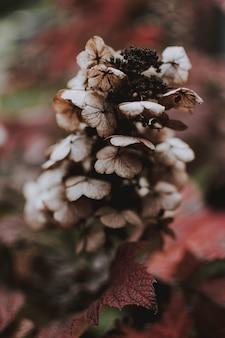 Verticale shot van een bruine plant met natuurlijke onscherpe achtergrond
