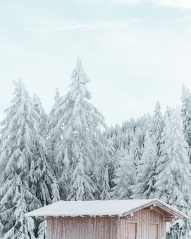 Verticale shot van een houten huisje met de prachtige besneeuwde naaldboom