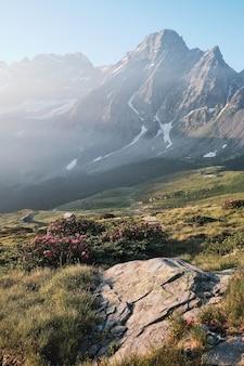 Verticale shot van een met gras begroeide heuvel met paarse bloemen en een berg