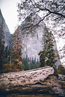 Verticale shot van een scène in de natuur met bomen en rotsen op de achtergrond