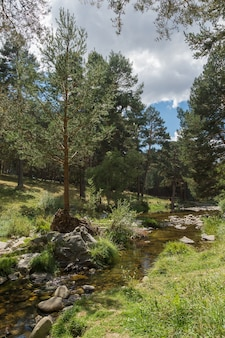 Verticale shot van een transparante rivier die stroomt tussen pijnbomen en groene weide diagonaal met bewolkte hemel