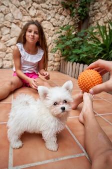 Verticale stockfoto van een kleine witte hond die naar een bal kijkt die een kind vooraan vasthoudt met een uitdrukking van spanning. huisdieren en familie