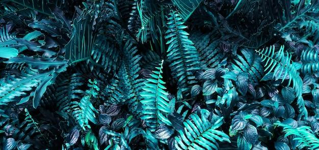 Verticale tuin met tropisch groen blad, contrast