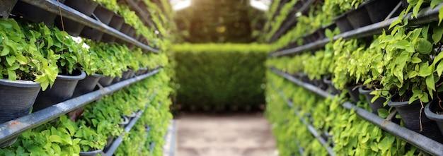 Verticale tuinbouw met ijzeren rek voor groene wand uit de natuur in bannerformaat