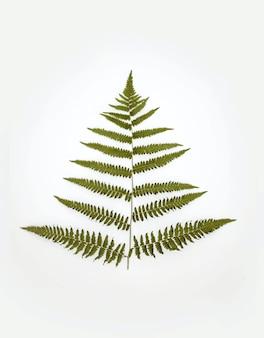 Verticale weergave van een groene plant op een witte achtergrond