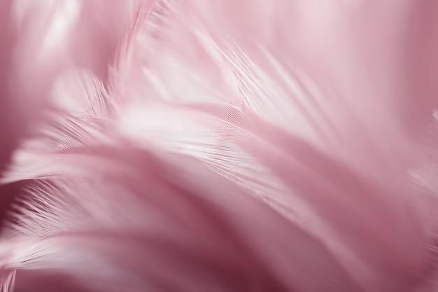 Vervagen roze kippenveren