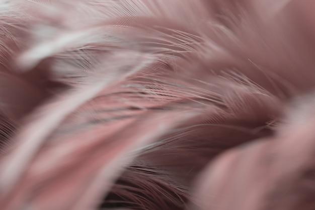 Vervagen vogel kippen veer textuur voor achtergrond