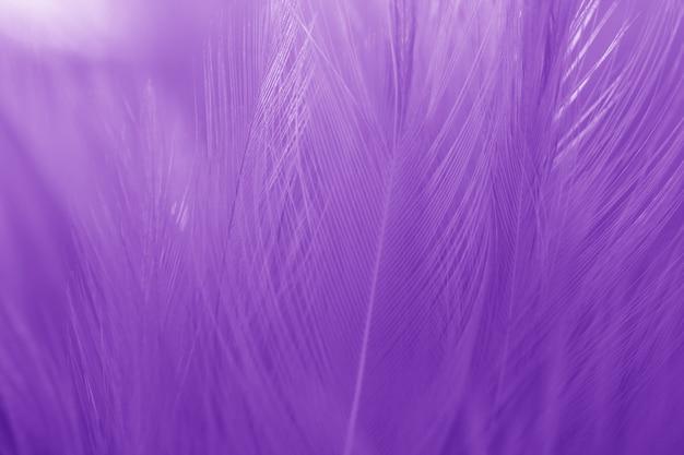 Vervaging bird feather textuur