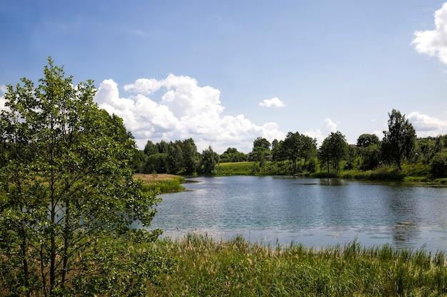 Vervuild water in een meer of rivier in de zomer of lente, dieren in het wild met zijn kenmerken in het warme zomerseizoen