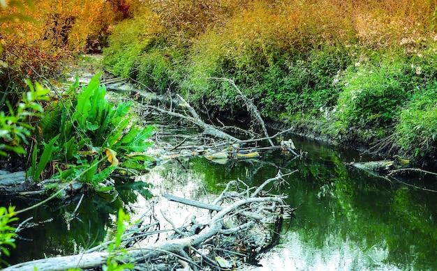 Vervuilde rivier buitenshuis. plastic fles in het water. schadelijk mens voor de natuur. vuile plek in de herfst.