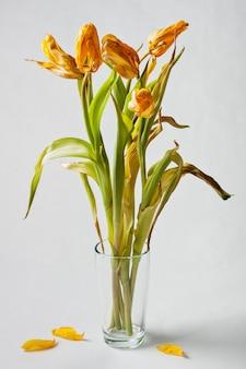Verwelkt gele tulpen