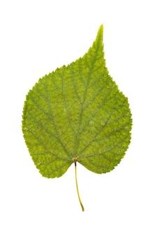 Verzameling van bladeren geïsoleerd op een witte achtergrond