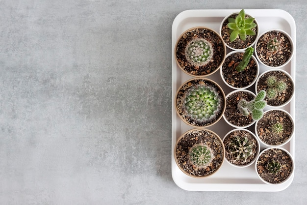 Verzameling van cactussen en vetplanten in kleine papieren bekertjes op een dienblad
