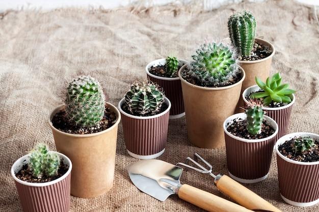 Verzameling van cactussen en vetplanten in kleine papieren bekertjes.
