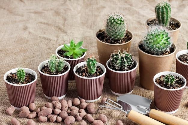 Verzameling van cactussen en vetplanten in kleine papieren bekertjes