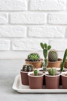 Verzameling van cactussen en vetplanten in papieren bekers op een dienblad