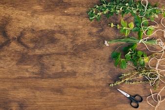 Verzameling van groene plant twijgen in de buurt van schaar