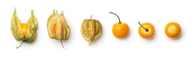 Verzameling van physalis bessen geïsoleerd op een witte achtergrond. set van meerdere afbeeldingen. onderdeel van series