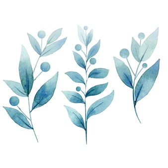 Verzameling van planten met blauwe bladeren illustratie