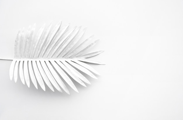 Verzameling van tropisch blad in witte kleur