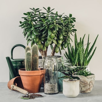 Verzameling van verschillende cactus- en vetplanten in verschillende potten.