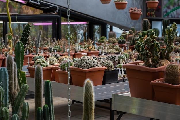 Verzameling van verschillende tropische cactus- en vetplanten in verschillende potten. ingemaakte cactus in de kastuin