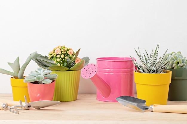 Verzameling van verschillende vetplanten en planten in gekleurde potten en tuingereedschap. ingemaakte kamerplanten tegen lichte muur. de stijlvolle binnentuin. huis tuinieren concept