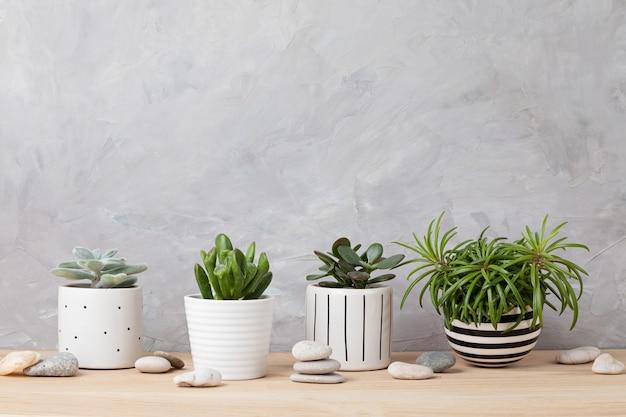 Verzameling van verschillende vetplanten en planten in gekleurde potten. ingemaakte cactussen en kamerplanten tegen lichte muur. de stijlvolle binnentuin