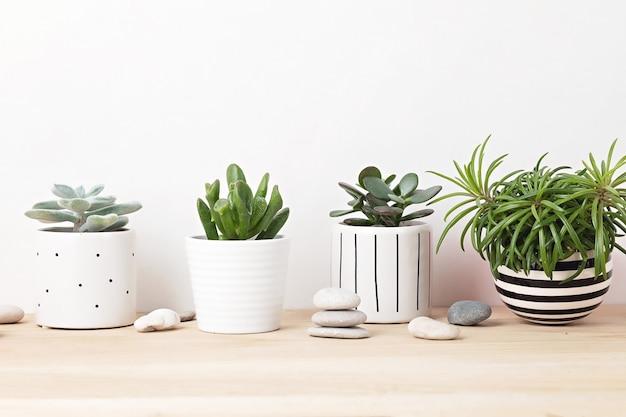 Verzameling van verschillende vetplanten en planten in gekleurde potten. ingemaakte cactussen en kamerplanten tegen lichte muur. het stijlvolle interieur voor de huistuin