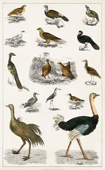 Verzameling van verschillende vogels uit een geschiedenis van de aarde en geanimeerde natuur (1820) door oliver goldsmi