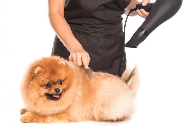 Verzorg een hond
