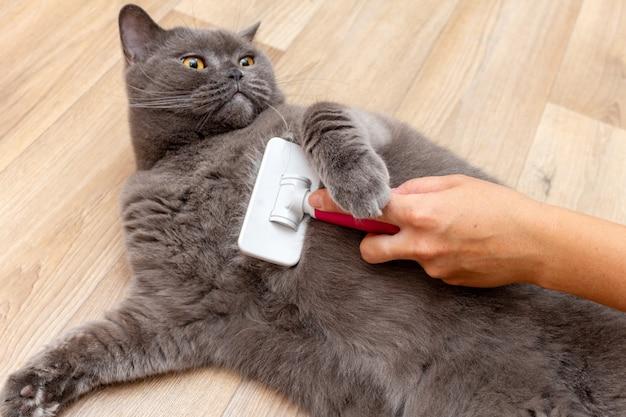 Verzorgen van borstelen grijze mooie schattige kat met een speciale borstel voor het verzorgen van huisdieren zorgconcept