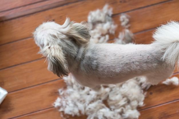 Verzorging en kapsel hondenbont door mens met clipper