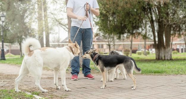 Verzorging van huisdieren. professionele mannelijke hondenuitlater die een roedel honden op parkpad loopt