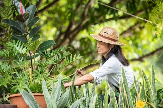 Verzorging van planten. snoeien voor verdere weelderige bloei. vrouwelijke handen knippen de takken en vergeelde bladeren van een sierplant af met een schaar. vrouw snoeien in haar tuin.