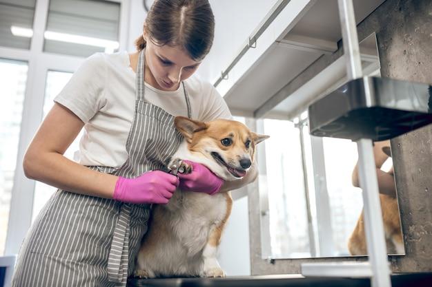 Verzorgingssalon voor huisdieren. vrouwelijke trimmer die klauwen snijdt tot een schattige hond