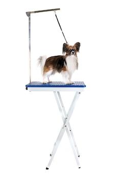 Verzorgingstafel en kleine hond