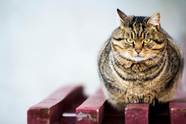Vet gestreepte kat met groene ogen