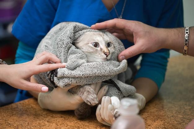 Veterinair katheter plaatsen via een kat in de kliniek