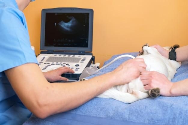Veterinair teamwerk maakt een echo van een kat. kat op echografie in een dierenkliniek. medische echografie.