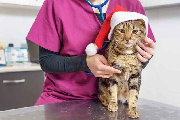 Veterinaire arts die een leuke kat met de hoed van de kerstman onderzoekt