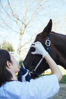 Veterinaire paarden op de boerderij die een beoordeling in één oog uitvoeren.