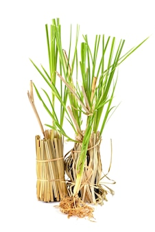Vetiver gras of vetiveria zizanioides bomen geïsoleerd op een witte achtergrond.