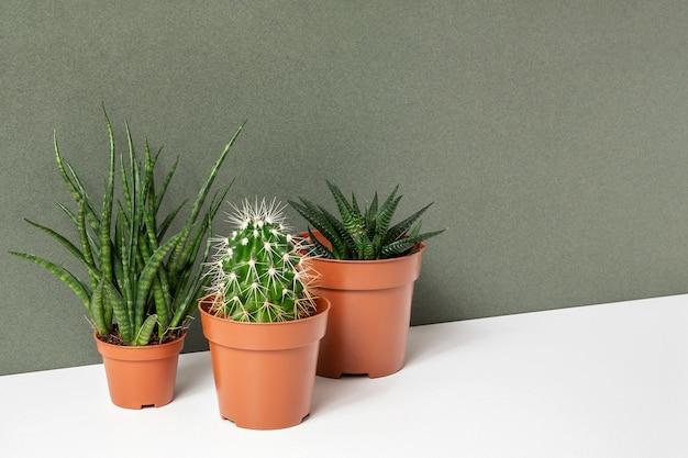 Vetplanten en cactussen in bruine potten op tafel