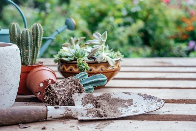 Vetplanten en cactussen verpotten in de moestuin