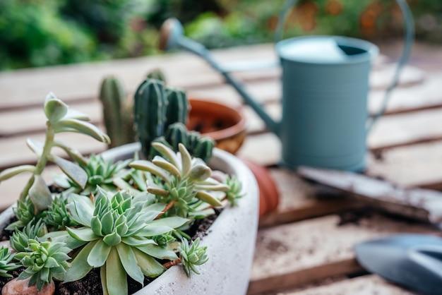 Vetplanten en cactussen verpotten thuis gereedschap potten en gieter