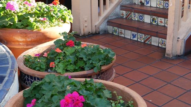 Vetplanten in bloempot, tuinieren in californië usa. groene kamerplanten, kleipotten. mexicaans tuinontwerp, dorre woestijn decoratieve sierteelt. botanisch siergroen. kleurrijke tegel op trappen