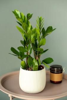 Vetplanten in diy betonnen pot. scandinavische kamer interieurdecoratie. grijze muur