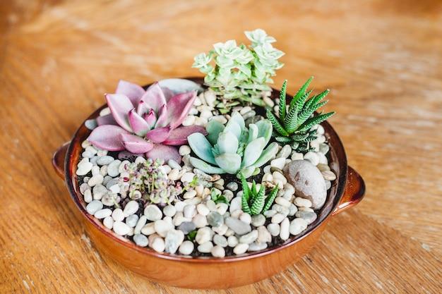 Vetplanten in potten, bloemen thuis